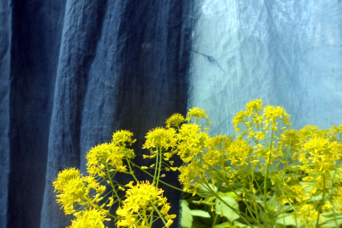 woad flowers and woad dyed linen